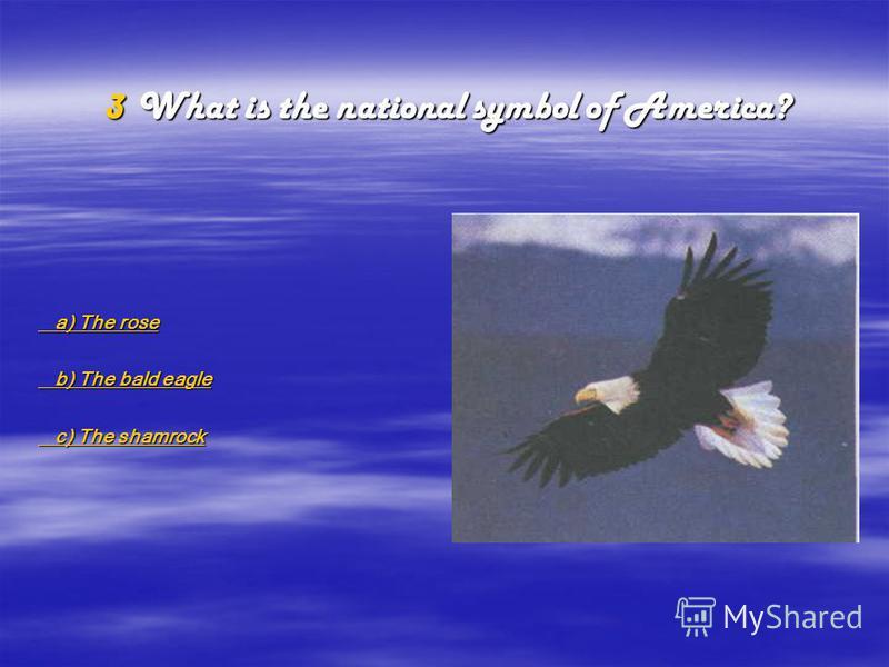 a a )))) T T T T hhhh eeee r r r r oooo ssss eeee b b )))) T T T T hhhh eeee b b b b aaaa llll dddd e e e e aaaa gggg llll eeee c c )))) T T T T hhhh eeee s s s s hhhh aaaa mmmm rrrr oooo cccc kkkk 3W3W3W3What is the national symbol of America?