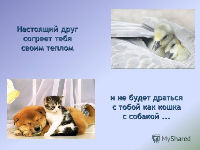 Настоящий друг согреет тебя своим теплом и не будет драться с тобой как кошка с собакой...