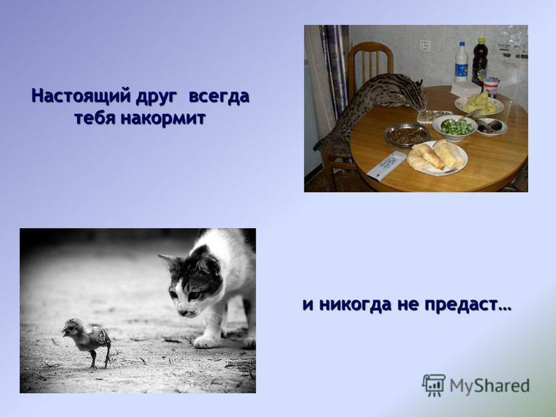 Настоящий друг всегда тебя накормит и никогда не предаст…
