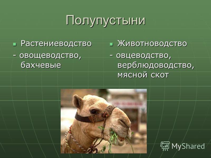 Полупустыни Растениеводство Растениеводство - овощеводство, бахчевые Животноводство Животноводство - овцеводство, верблюдоводство, мясной скот