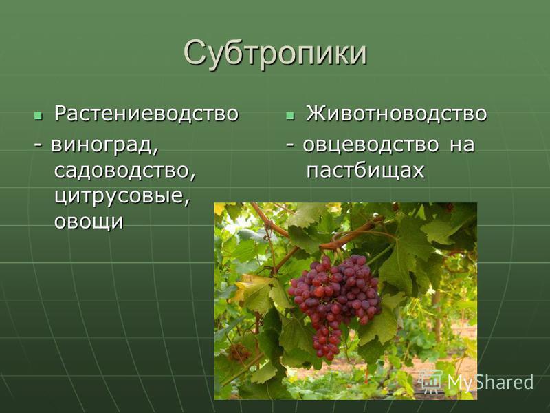 Субтропики Растениеводство Растениеводство - виноград, садоводство, цитрусовые, овощи Животноводство Животноводство - овцеводство на пастбищах