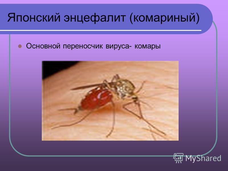 Японский энцефалит (комариный) Основной переносчик вируса- комары