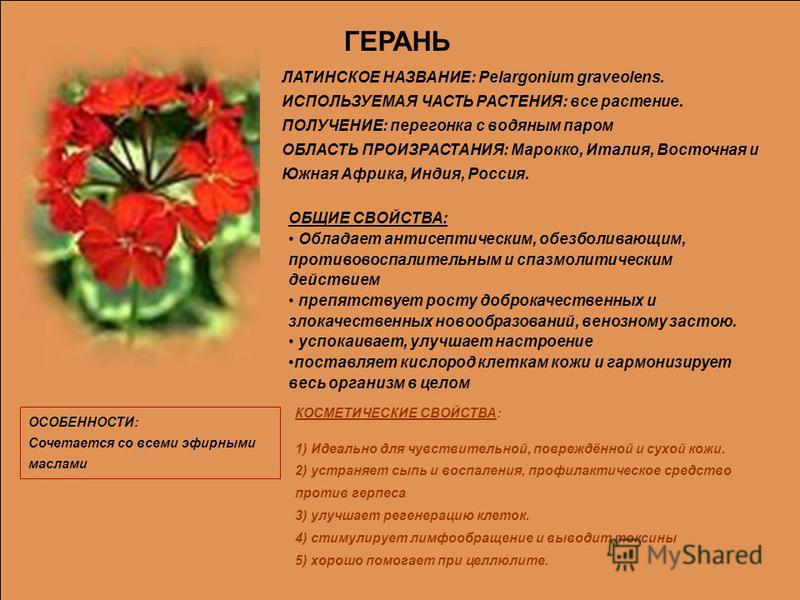 ГЕРАНЬ ЛАТИНСКОЕ НАЗВАНИЕ: Реlаrgonium graveolens. ИСПОЛЬЗУЕМАЯ ЧАСТЬ РАСТЕНИЯ: все растение. ПОЛУЧЕНИЕ: перегонка с водяным паром ОБЛАСТЬ ПРОИЗРАСТАНИЯ: Марокко, Италия, Восточная и Южная Африка, Индия, Россия. ОБЩИЕ СВОЙСТВА: Обладает антисептическ