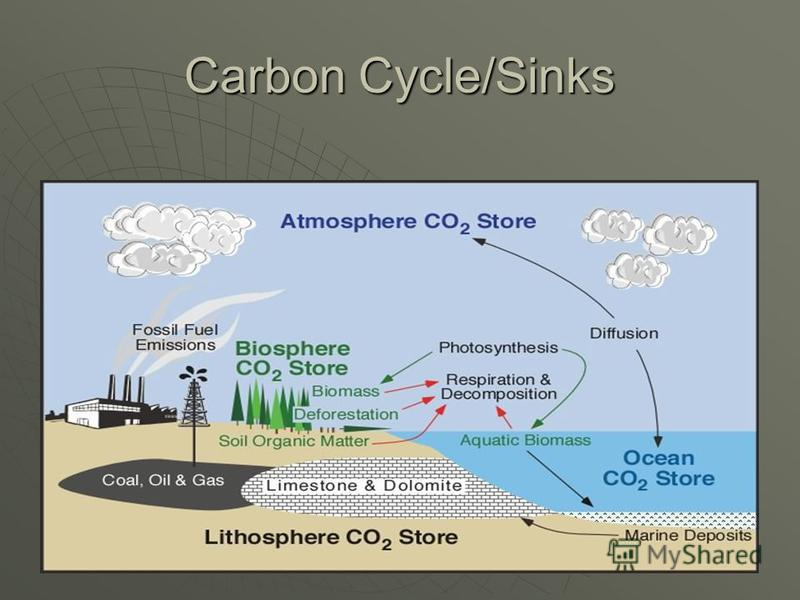 Carbon Cycle/Sinks