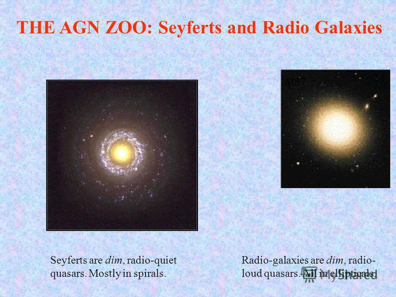 THE AGN ZOO: Seyferts and Radio Galaxies M87 Seyferts are dim, radio-quiet quasars. Mostly in spirals. Radio-galaxies are dim, radio- loud quasars. All in ellipticals.