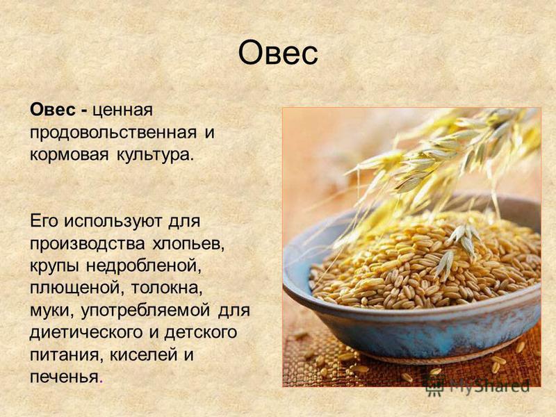 Овес Овес - ценная продовольственная и кормовая культура. Его используют для производства хлопьев, крупы недробленой, плющеной, толокна, муки, употребляемой для диетического и детского питания, киселей и печенья.