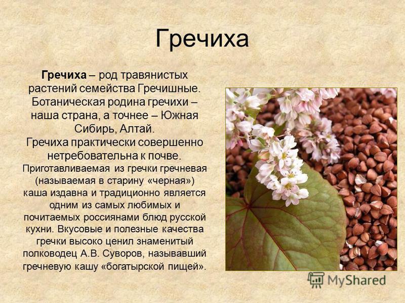 Гречиха Гречиха – род травянистых растений семейства Гречишные. Ботаническая родина гречихи – наша страна, а точнее – Южная Сибирь, Алтай. Гречиха практически совершенно нетребовательна к почве. Приготавливаемая из гречки гречневая (называемая в стар