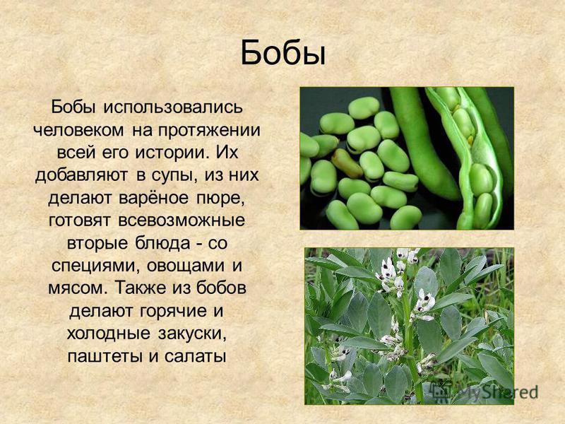 Бобы Бобы использовались человеком на протяжении всей его истории. Их добавляют в супы, из них делают варёное пюре, готовят всевозможные вторые блюда - со специями, овощами и мясом. Также из бобов делают горячие и холодные закуски, паштеты и салаты