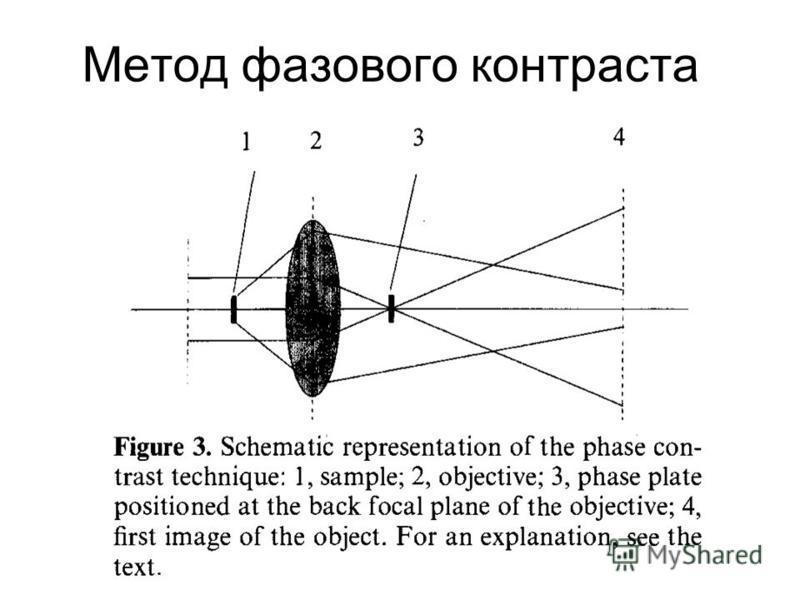 Метод фазового контраста