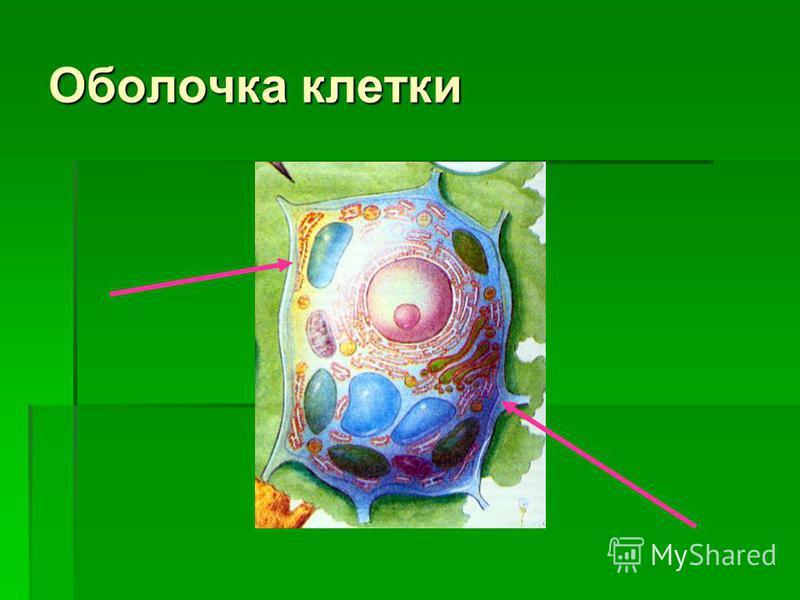 Оболочка клетки