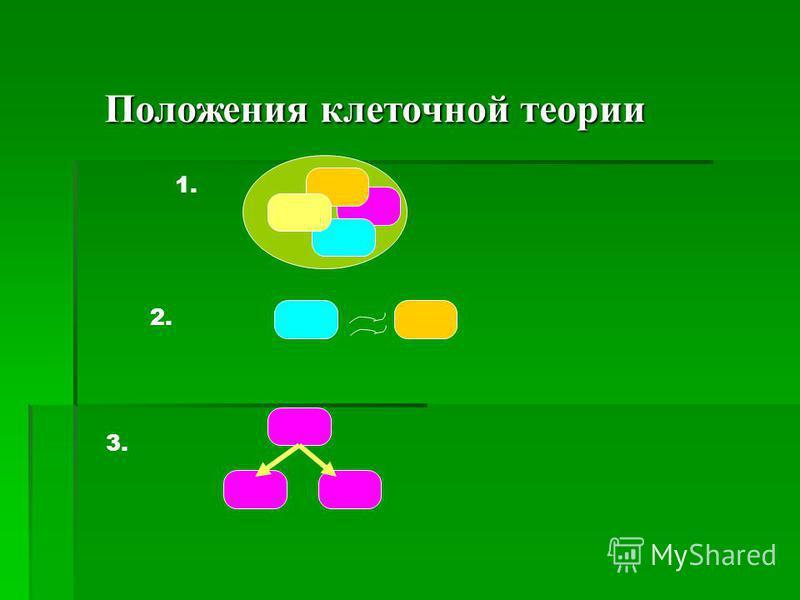 Положения клеточной теории 1. 2. 3.