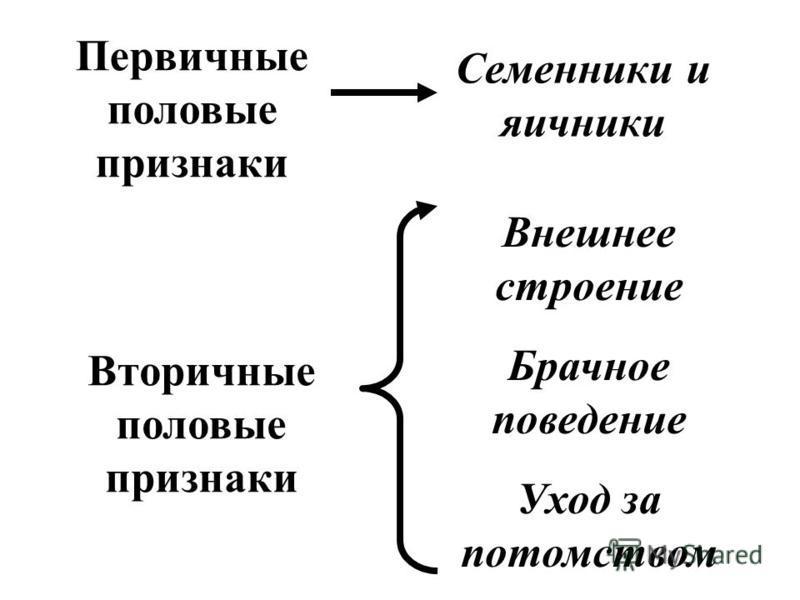 Первичные половые признаки Вторичные половые признаки Семенники и яичники Внешнее строение Брачное поведение Уход за потомством