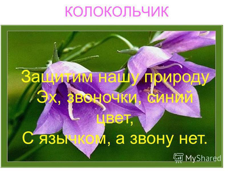 КОЛОКОЛЬЧИК Защитим нашу природу Эх, звоночки, синий цвет, С язычком, а звону нет.