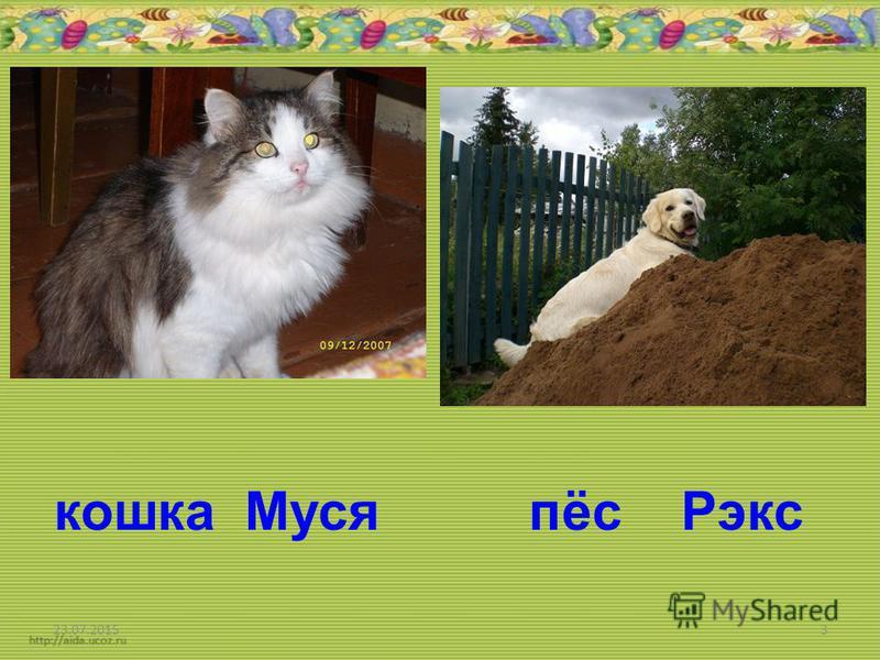 23.07.20153 кошка Муся пёс Рэкс