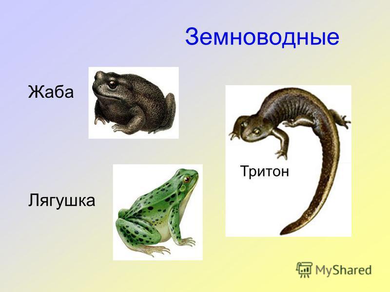 Земноводные Жаба Лягушка Тритон