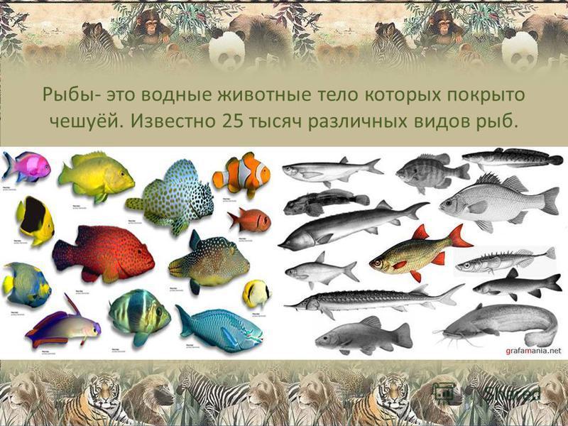 Рыбы- это водные животные тело которых покрыто чешуёй. Известно 25 тысяч различных видов рыб.