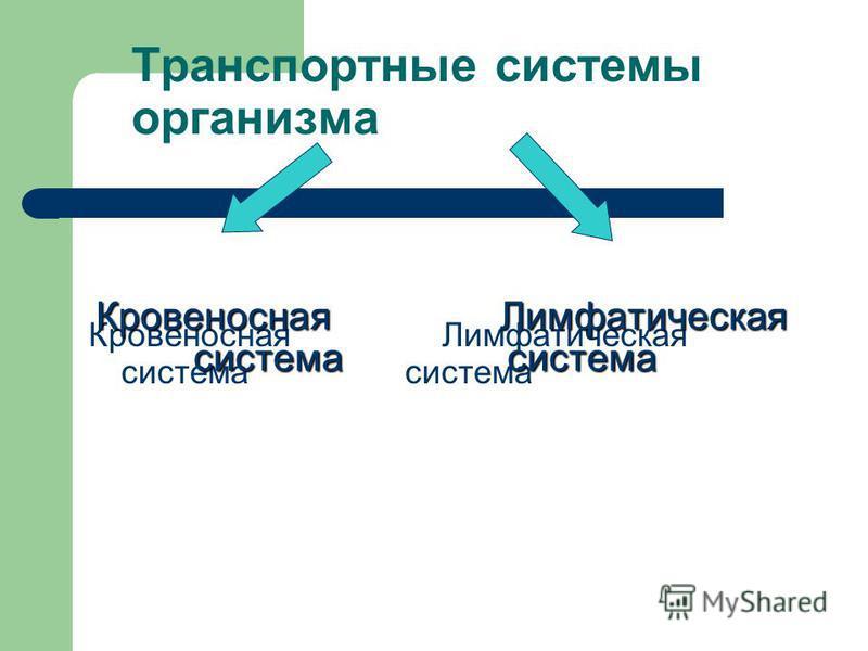 Транспортные системы организма Кровеносная Лимфатическая система система