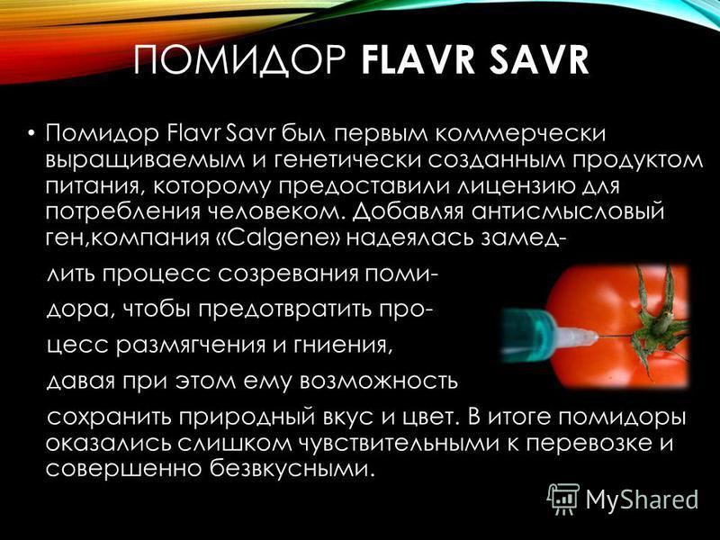 ПОМИДОР FLAVR SAVR Помидор Flavr Savr был первым коммерчески выращиваемым и генетически созданным продуктом питания, которому предоставили лицензию для потребления человеком. Добавляя антисмысловые ген,компания «Calgene» надеялась замедлить процесс с