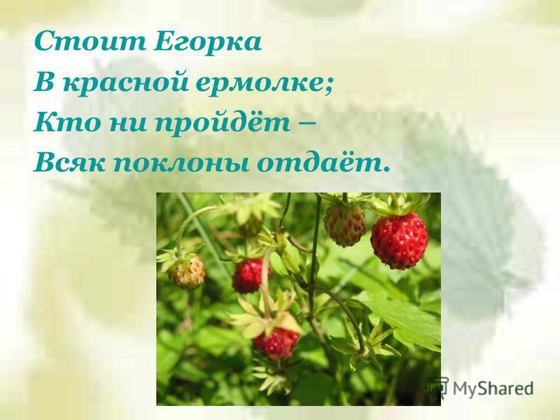 Стоит Егорка В красной ермолке; Кто ни пройдёт – Всяк поклоны отдаёт.