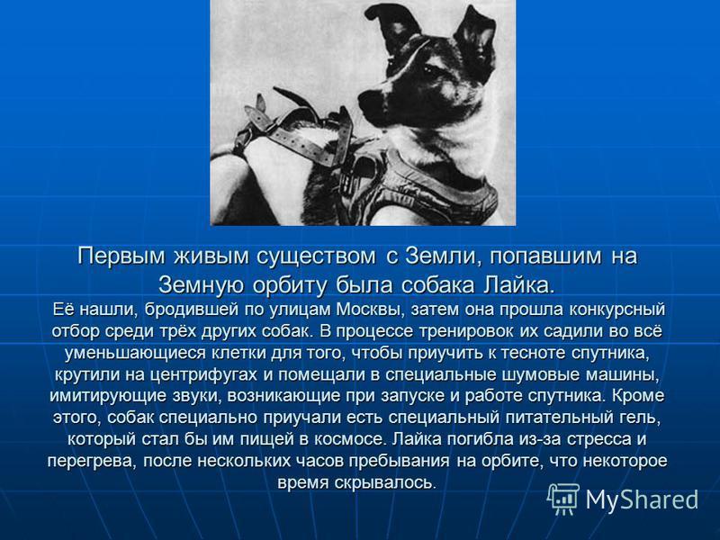 Первым живым существом с Земли, попавшим на Земную орбиту была собака Лайка. Её нашли, бродившей по улицам Москвы, затем она прошла конкурсный отбор среди трёх других собак. В процессе тренировок их садили во всё уменьшающиеся клетки для того, чтобы