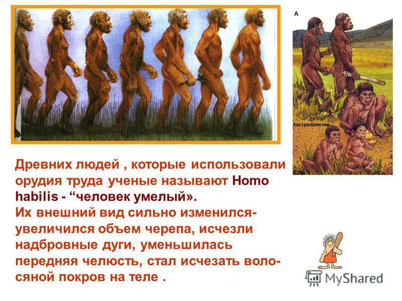Древних людей, которые использовали орудия труда ученые называют Homo habilis - человек умелый». Их внешний вид сильно изменился- увеличился объем черепа, исчезли надбровные дуги, уменьшилась передняя челюсть, стал исчезать волосяной покров на теле.