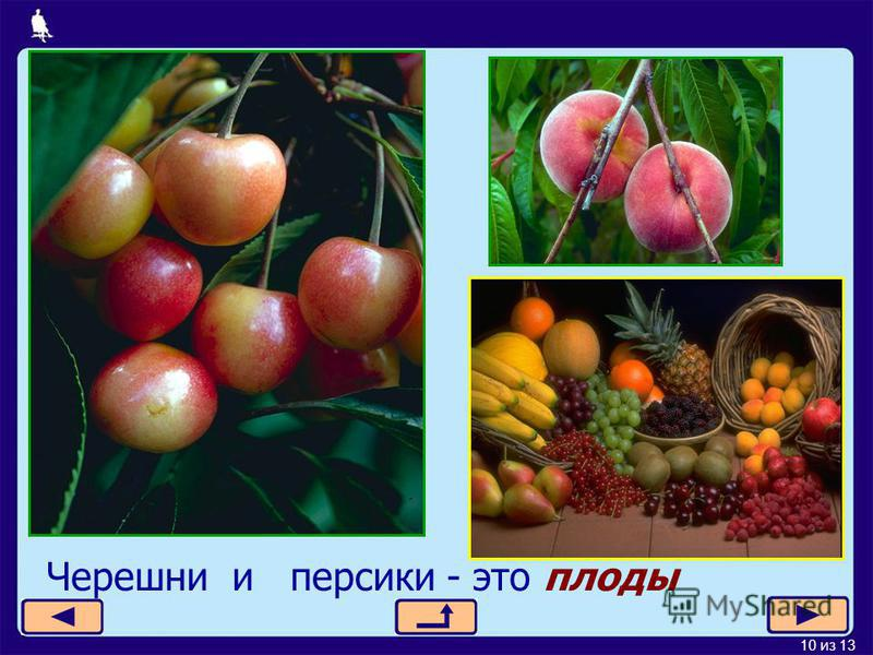 10 из 13 Черешни и персики - это плоды