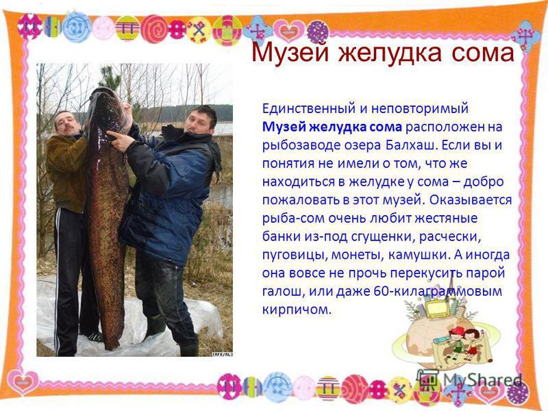 Музей желудка сома Единственный и неповторимый Музей желудка сома расположен на рыбозаводе озера Балхаш. Если вы и понятия не имели о том, что же находиться в желудке у сома – добро пожаловать в этот музей. Оказывается рыба-сом очень любит жестяные б