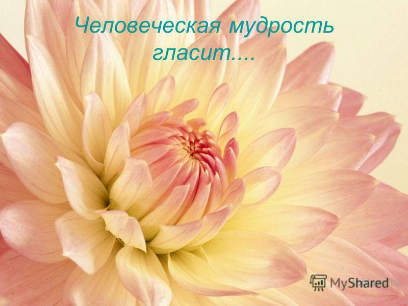 Человеческая мудрость гласит....