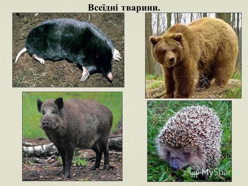 Всеїдні тварини.