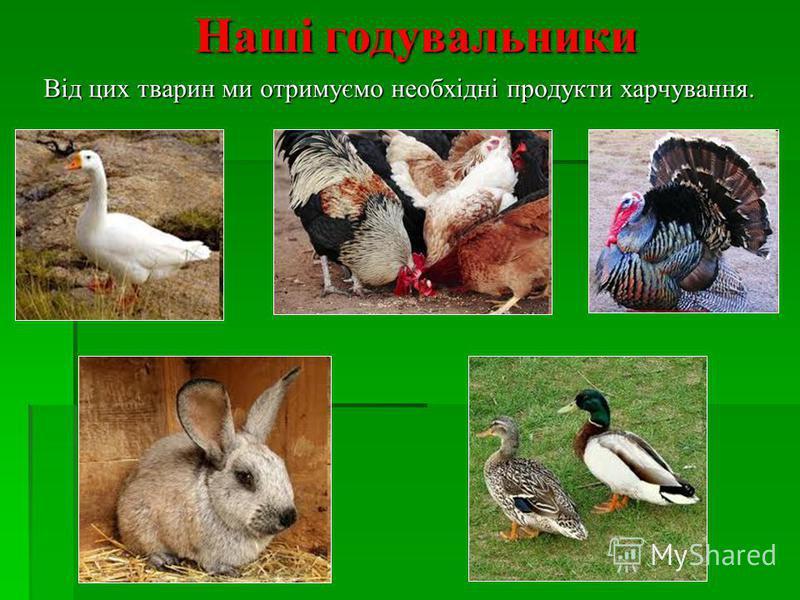 Наші годувальники Наші годувальники Від цих тварин ми отримуємо необхідні продукти харчування. Від цих тварин ми отримуємо необхідні продукти харчування.