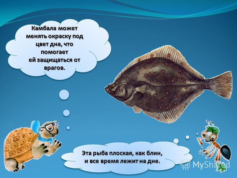 Камбала может менять окраску под цвет дна, что помогает ей защищаться от врагов. Эта рыба плоская, как блин, и все время лежит на дне.