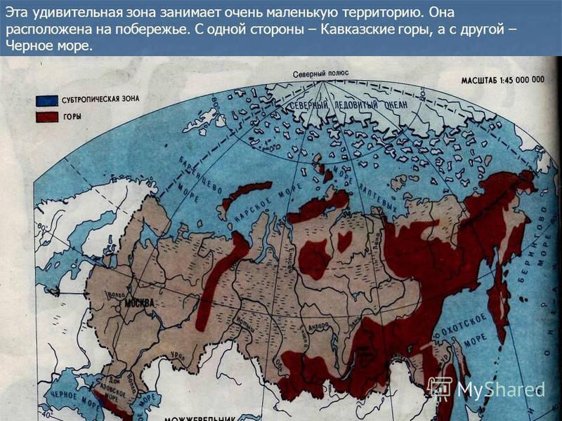 Эта удивительная зона занимает очень маленькую территорию. Она расположена на побережье. С одной стороны – Кавказские горы, а с другой – Черное море.