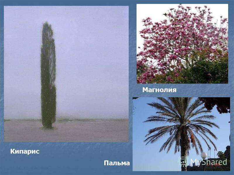 Кипарис Пальма Магнолия