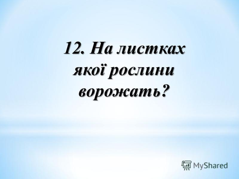 12. На листках якої рослини ворожать?