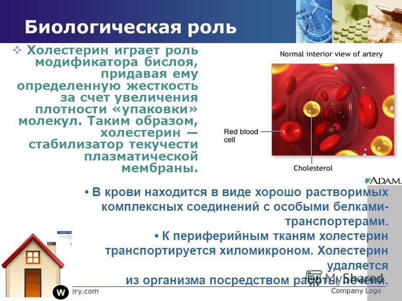 www.themegallery.com Company Logo Биологическая роль Холестерин играет роль модификатора бислоя, придавая ему определенную жесткость за счет увеличения плотности «упаковки» молекул. Таким образом, холестерин стабилизатор текучести плазматической мемб