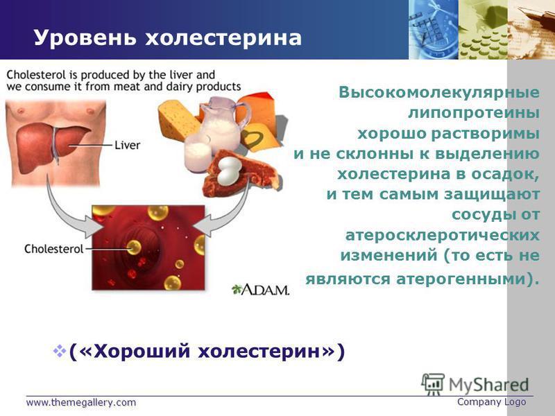 www.themegallery.com Company Logo Уровень холестерина Высокомолекулярные липопротеины хорошо растворимы и не склонны к выделению холестерина в осадок, и тем самым защищают сосуды от атеросклеротических изменений (то есть не являются атерогенными). («
