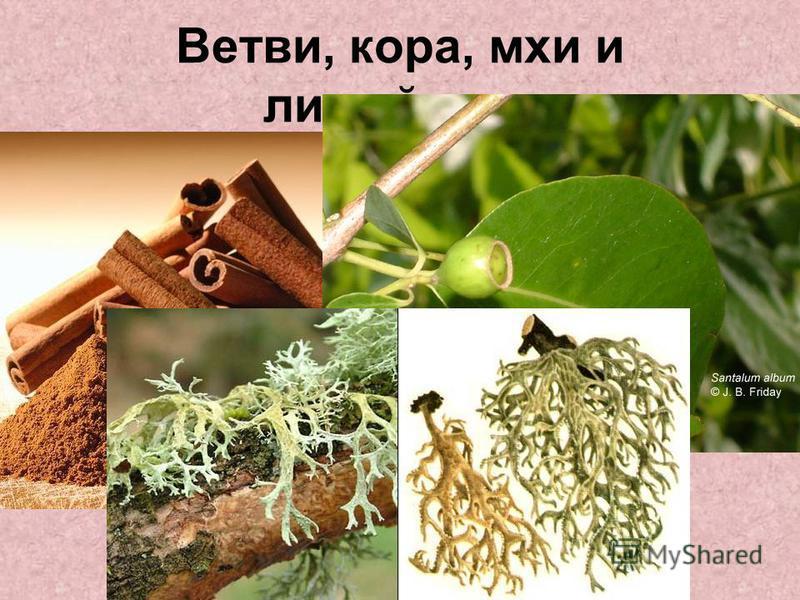 Ветви, кора, мхи и лишайники