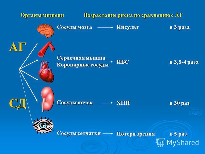 АГ Сосуды мозга Сердечная мышца Коронарные сосуды Сосуды почек Сосуды сетчатки ИнсультИБСХПН Потеря зрения в 3 раза в 3,5-4 раза в 30 раз в 5 раз СД Органы мишени Возрастание риска по сравнению с АГ