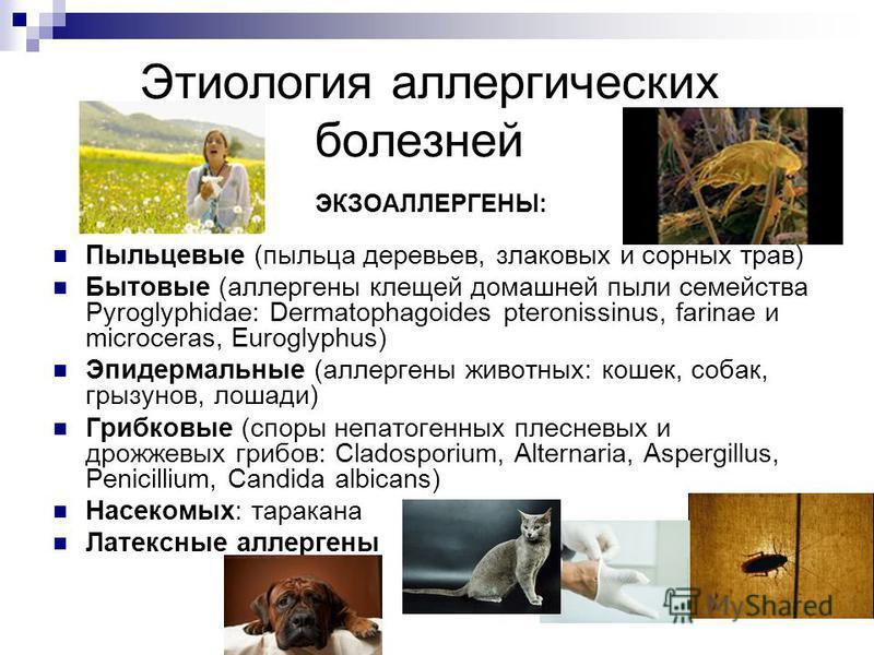 Этиология аллергических болезней ЭКЗОАЛЛЕРГЕНЫ: Пыльцевые (пыльца деревьев, злаковых и сорных трав) Бытовые (аллергены клещей домашней пыли семейства Pyroglyphidae: Dermatophagoides pteronissinus, farinae и microceras, Euroglyphus) Эпидермальные (алл