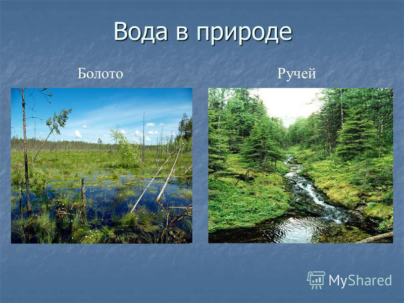 Вода в природе Болото Ручей