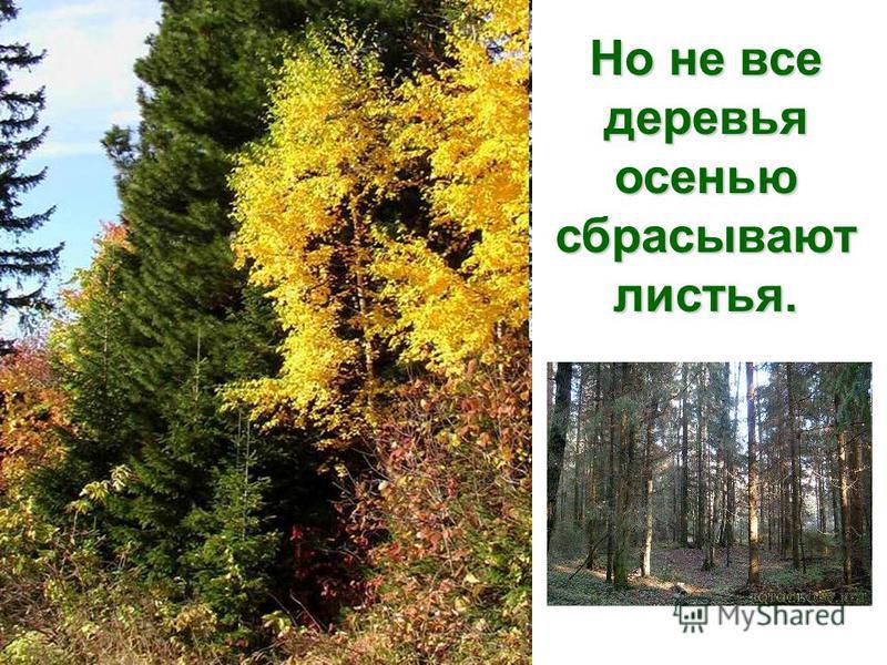 Поэтому листья вянут и опадают, а когда возвращаются теплые дни, появляется новая возвращаются теплые дни, появляется новая листва. листва.