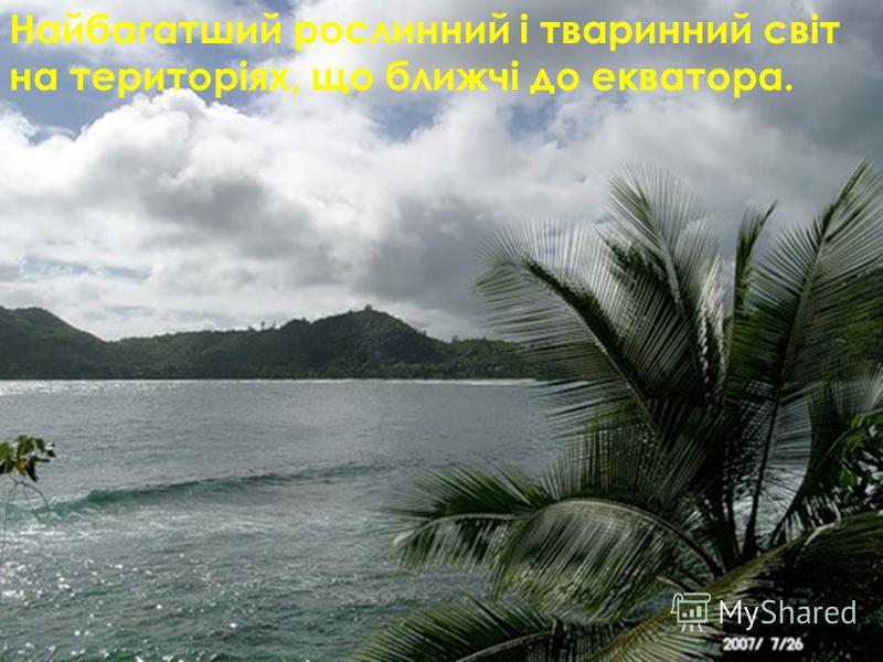 Найбагатший рослинний і тваринний світ на територіях, що ближчі до екватора.