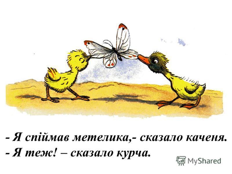 - Я знайшов червка,- сказало каченя. - Я теж! – сказало курча.