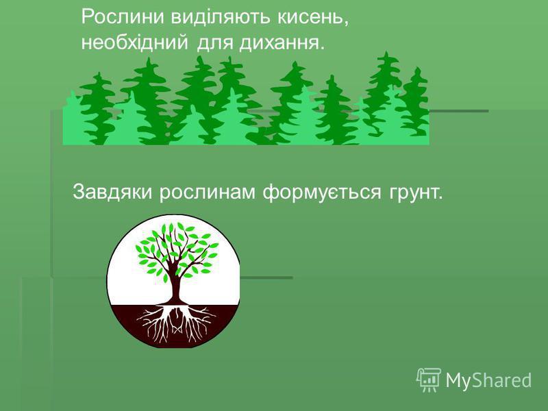 Рослини виділяють кисень, необхідний для дихання. Завдяки рослинам формується грунт.