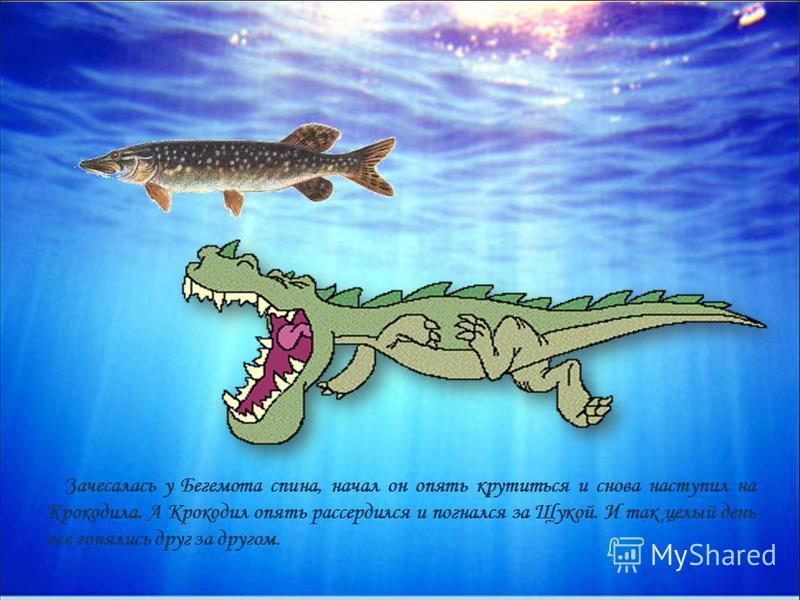 Зачесалась у Бегемота спина, начал он опять крутиться и снова наступил на Крокодила. А Крокодил опять рассердился и погнался за Щукой. И так целый день все гонялись друг за другом.