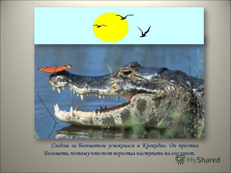 Следом за Бегемотом успокоился и Крокодил. Он простил Бегемота, потому что тот перестал наступать на его хвост.