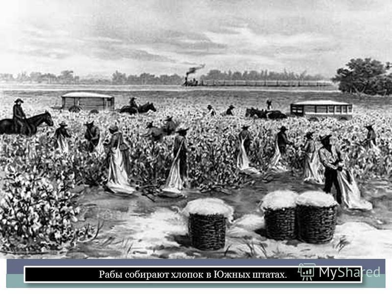 Рабы собирают хлопок в Южных штатах.