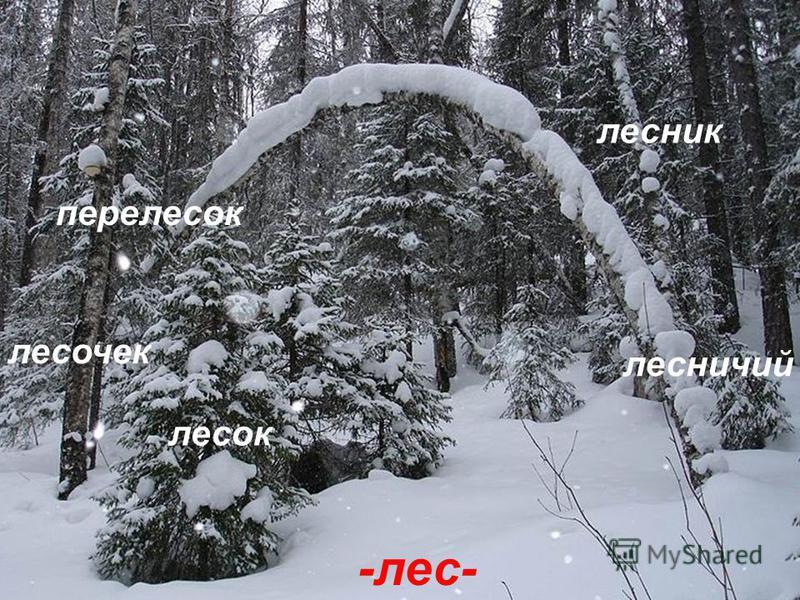 -лес- лесок лесочек перелесок лесник лесничий
