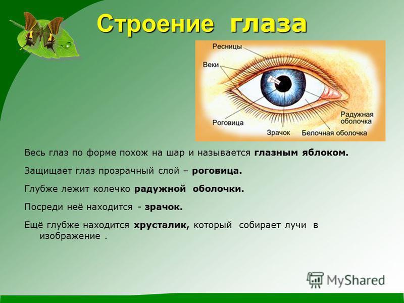 Строение глаза Весь глаз по форме похож на шар и называется глазным яблоком. Защищает глаз прозрачный слой – роговица. Глубже лежит колечко радужной оболочки. Посреди неё находится - зрачок. Ещё глубже находится хрусталик, который собирает лучи в изо