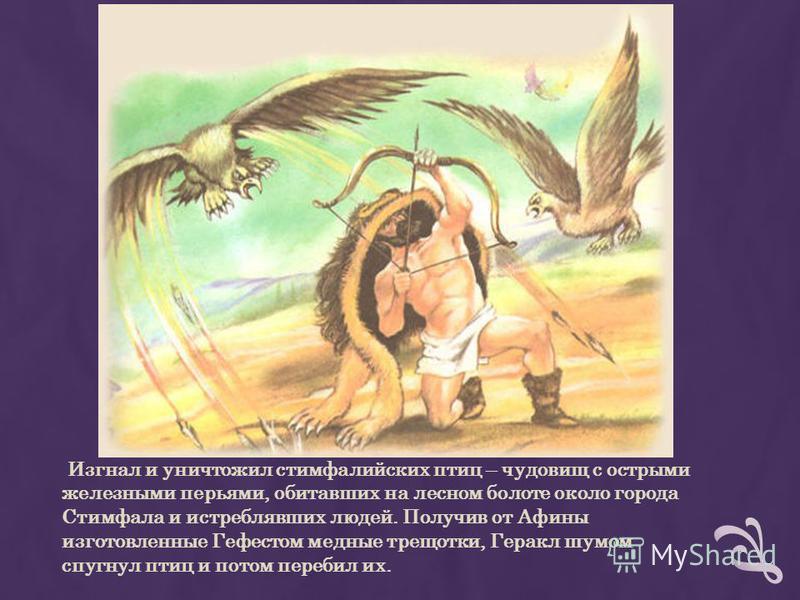 Изгнал и уничтожил стимфалийских птиц – чудовищ с острыми железными перьями, обитавших на лесном болоте около города Стимфала и истреблявших людей. Получив от Афины изготовленные Гефестом медные трещотки, Геракл шумом спугнул птиц и потом перебил их.